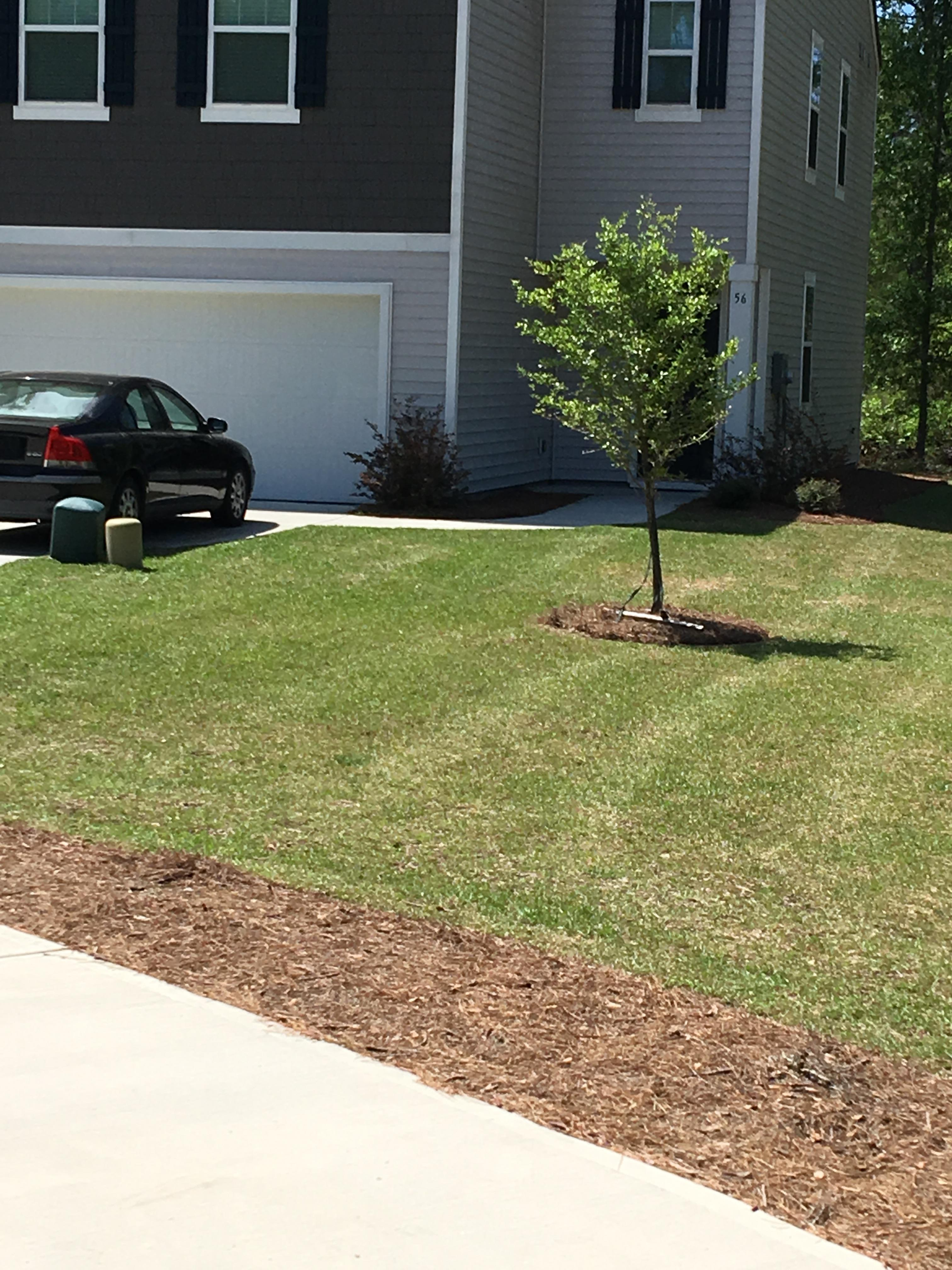 Magical lawn care service beaufort south carolina for Lawn treatment service