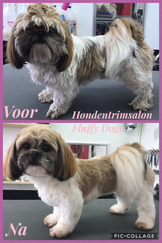 Hondentrimsalon Fluffy Dogs