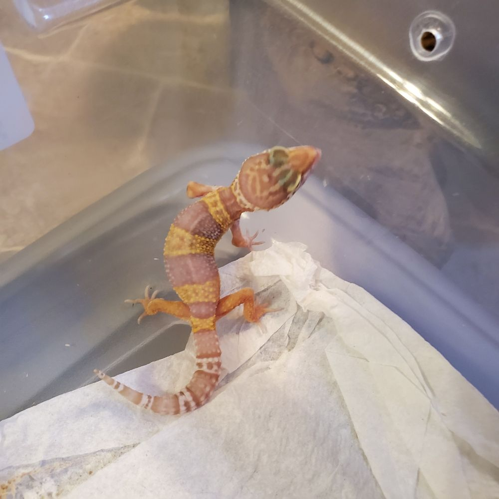Reptile Foods and More