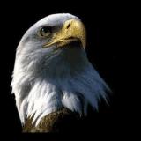 Scream'In Eagle Sales Ltd
