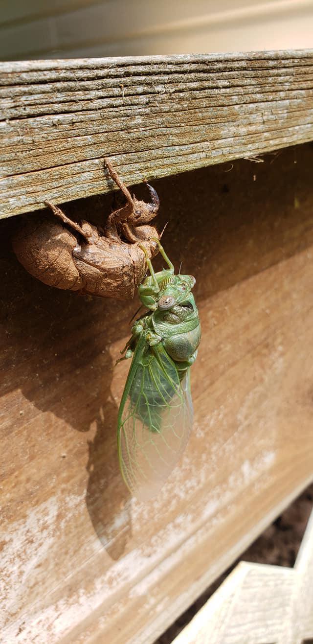 TruServ Pest Solutions