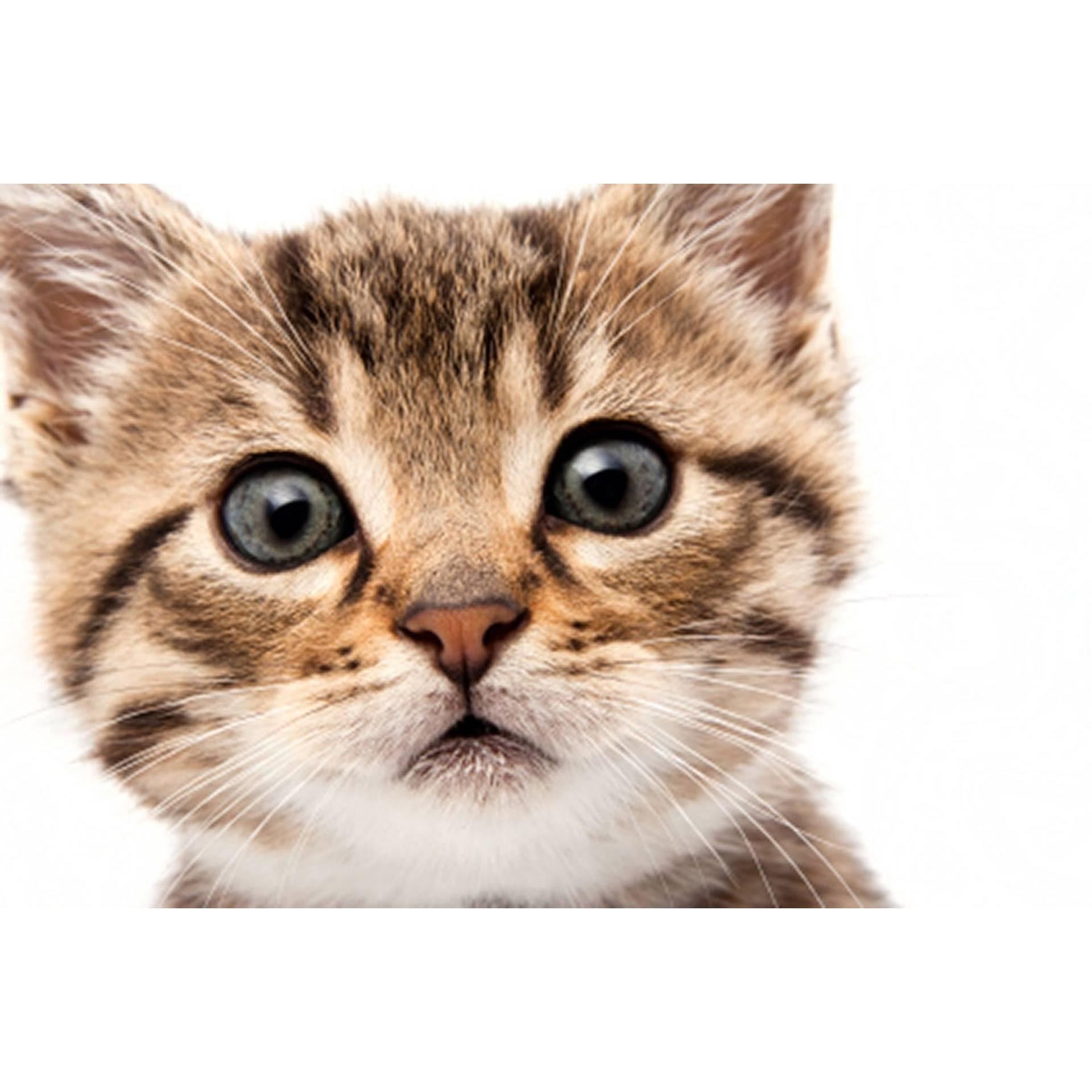 Cosy Cat Care - Rushden, Northamptonshire NN10 8EF - 07446 329704 | ShowMeLocal.com