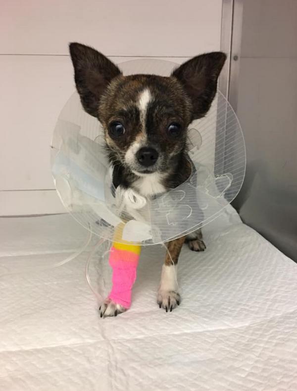 RPVET veterinární klinika
