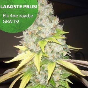 Wietzadenshop Free seeds online
