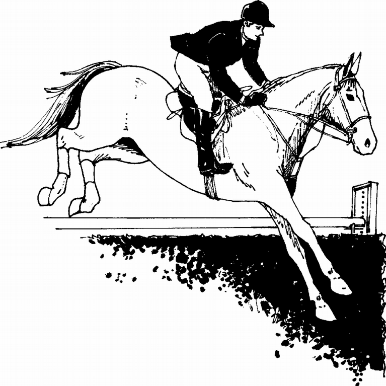 Morning Star Farm Riding Academy & Therapeutic Riding Center