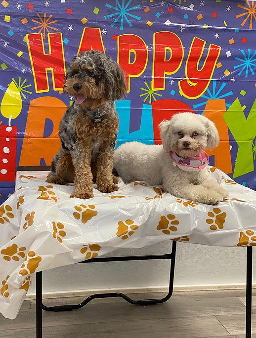 Barking Barney's Doggie Daycare