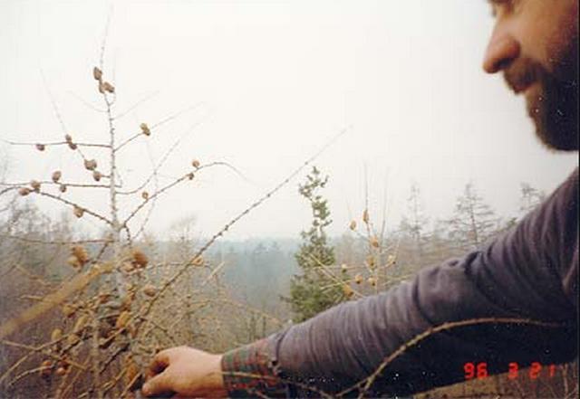 Rizikové kácení stromů - LIŠKA VLADIMÍR
