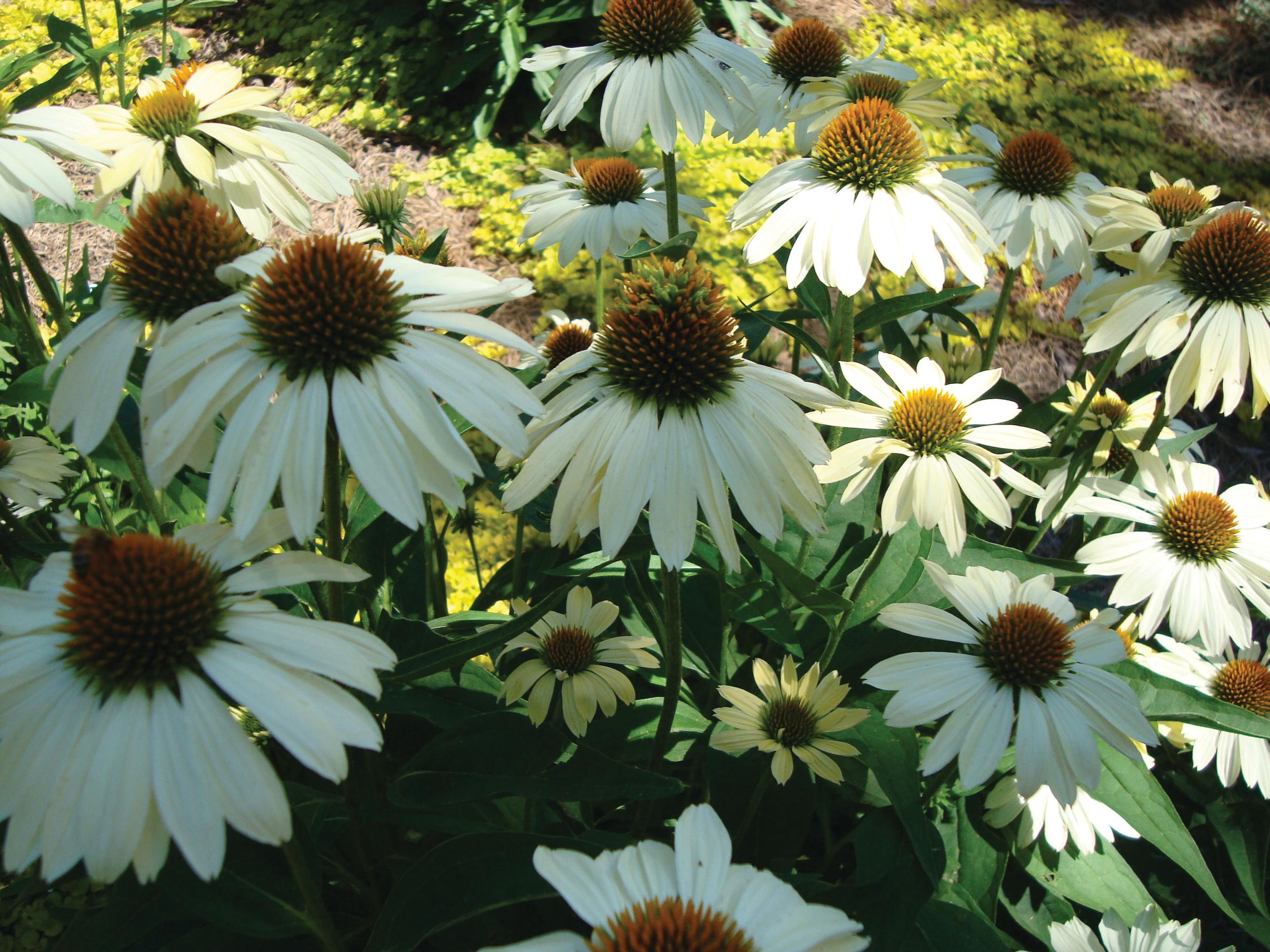 Greenleaf Garden Services image 8