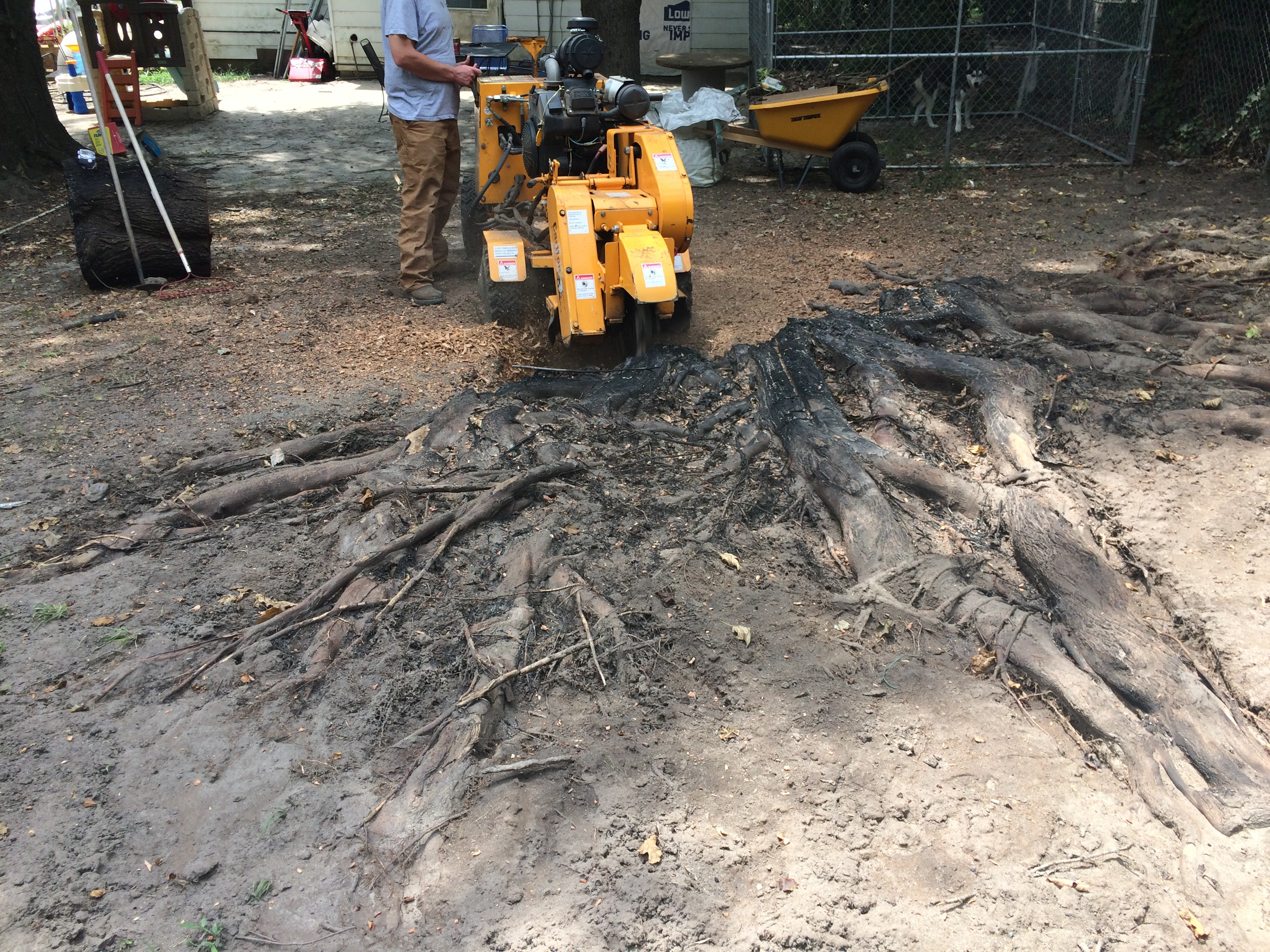 Poythress Stump Grinding