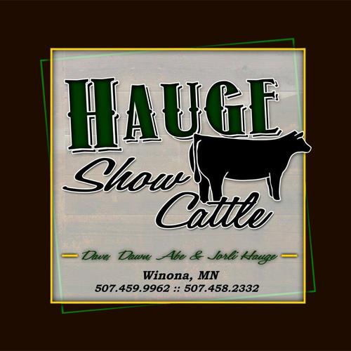 Hauge Show Cattle