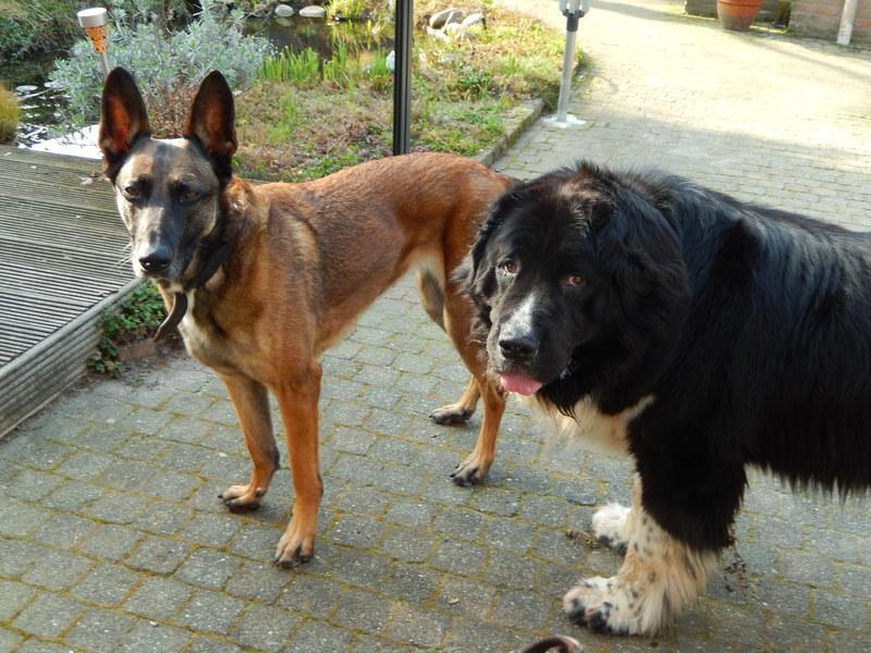 Hondenopvang De Koning