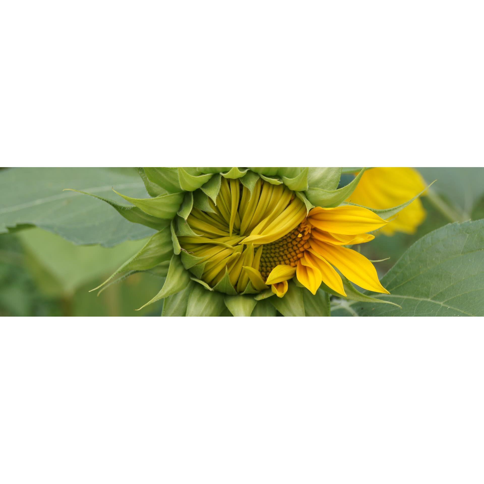 Artflowers - Bath, Somerset BA2 5BH - 07380 269627 | ShowMeLocal.com