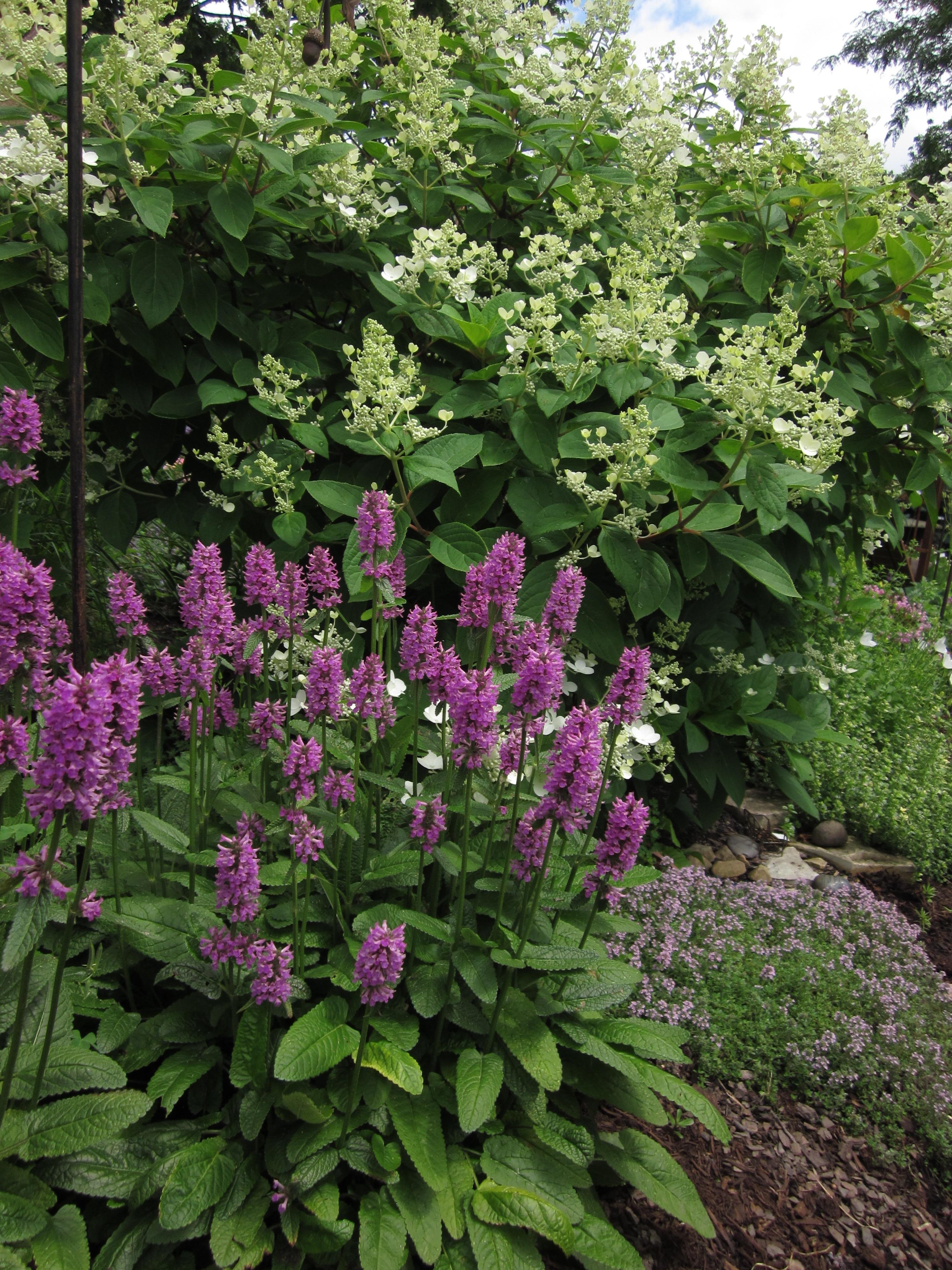 The growing place garden center naperville illinois il for Xd garden design