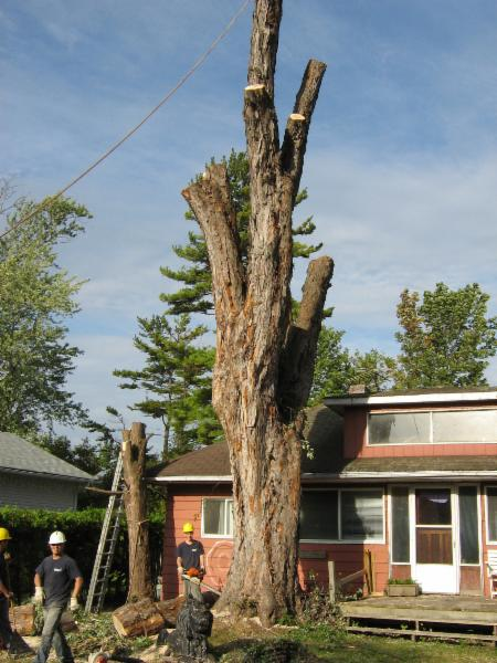 Wright's Tree Service