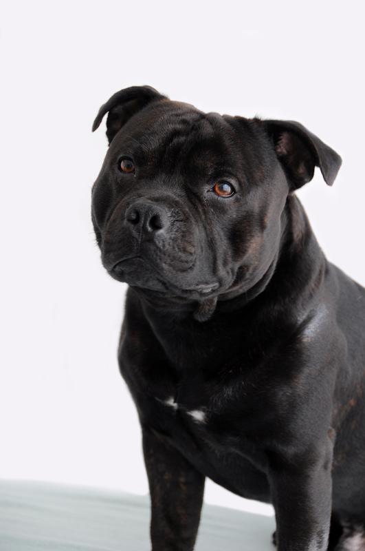 Femke van Hoeij Osteopathie Fysiotherapie en Chiropractie voor Dieren
