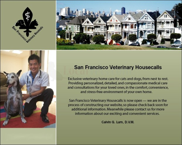 Best Cat Vet San Francisco