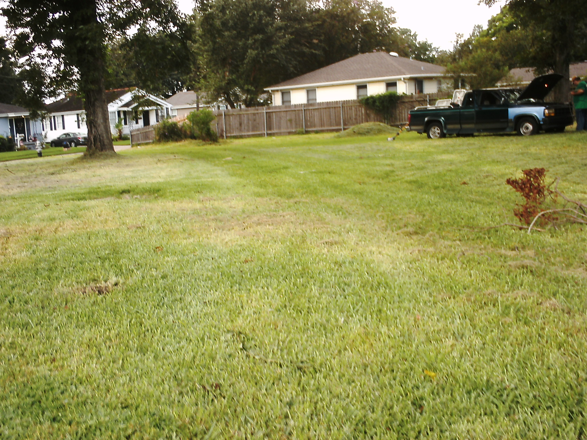 P a lawn care service westwego louisiana la for Local lawn care services