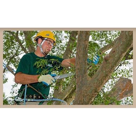 Belcher Tree Service