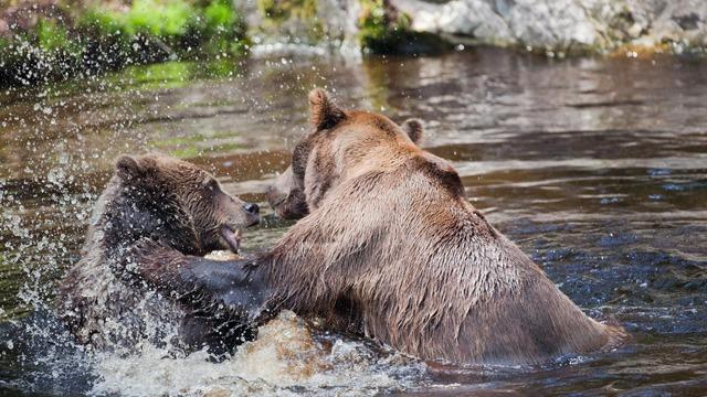 Bjørneparken AS