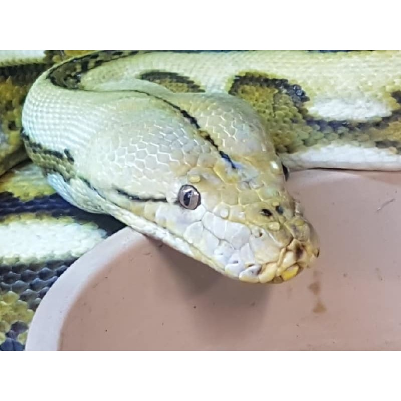 Underground Reptilez - Cradley Heath, West Midlands B64 6HN - 07914 637625 | ShowMeLocal.com