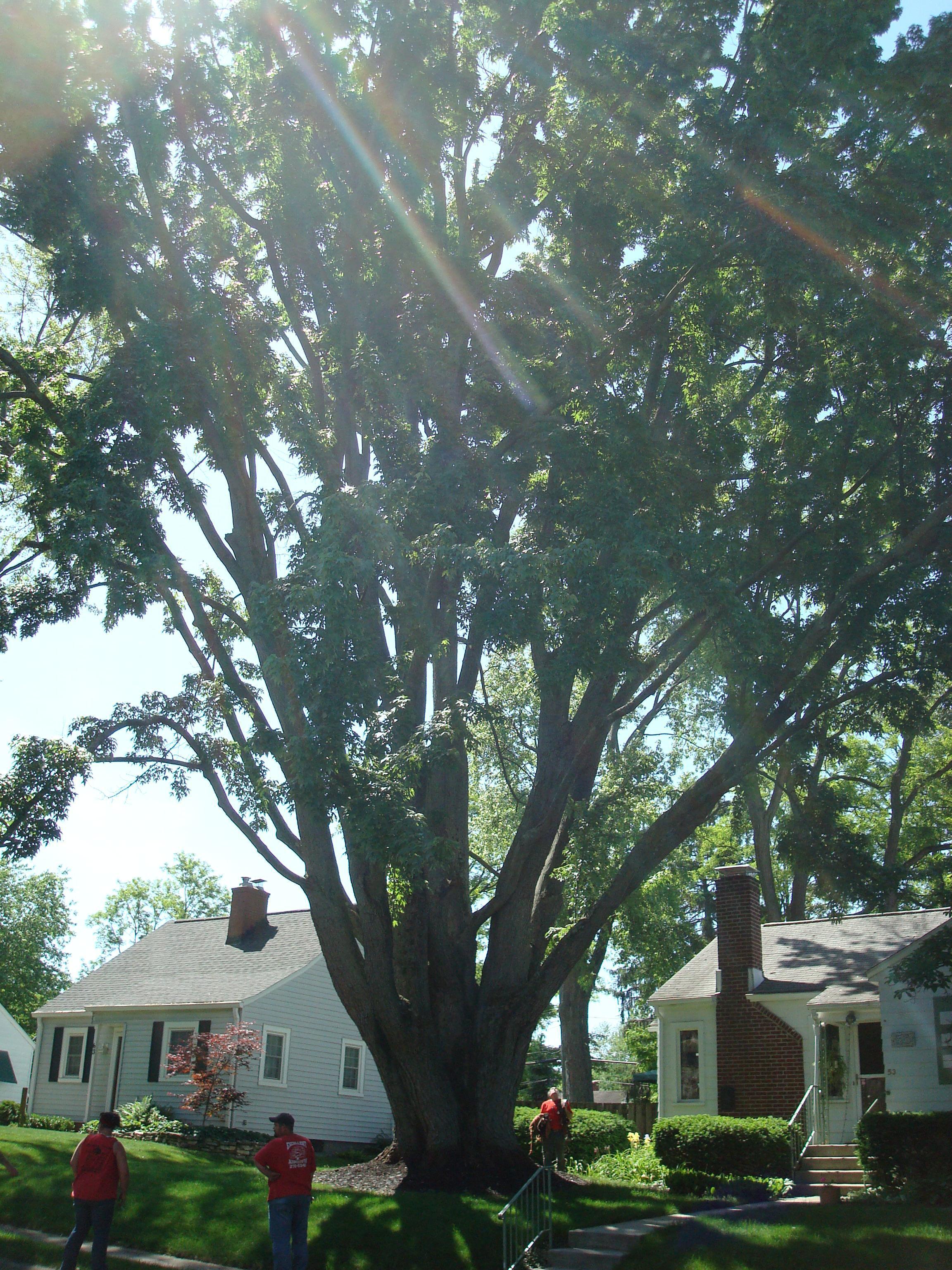 22 Wonderful Book Of Tree Services Columbus U2013 Dototday.com