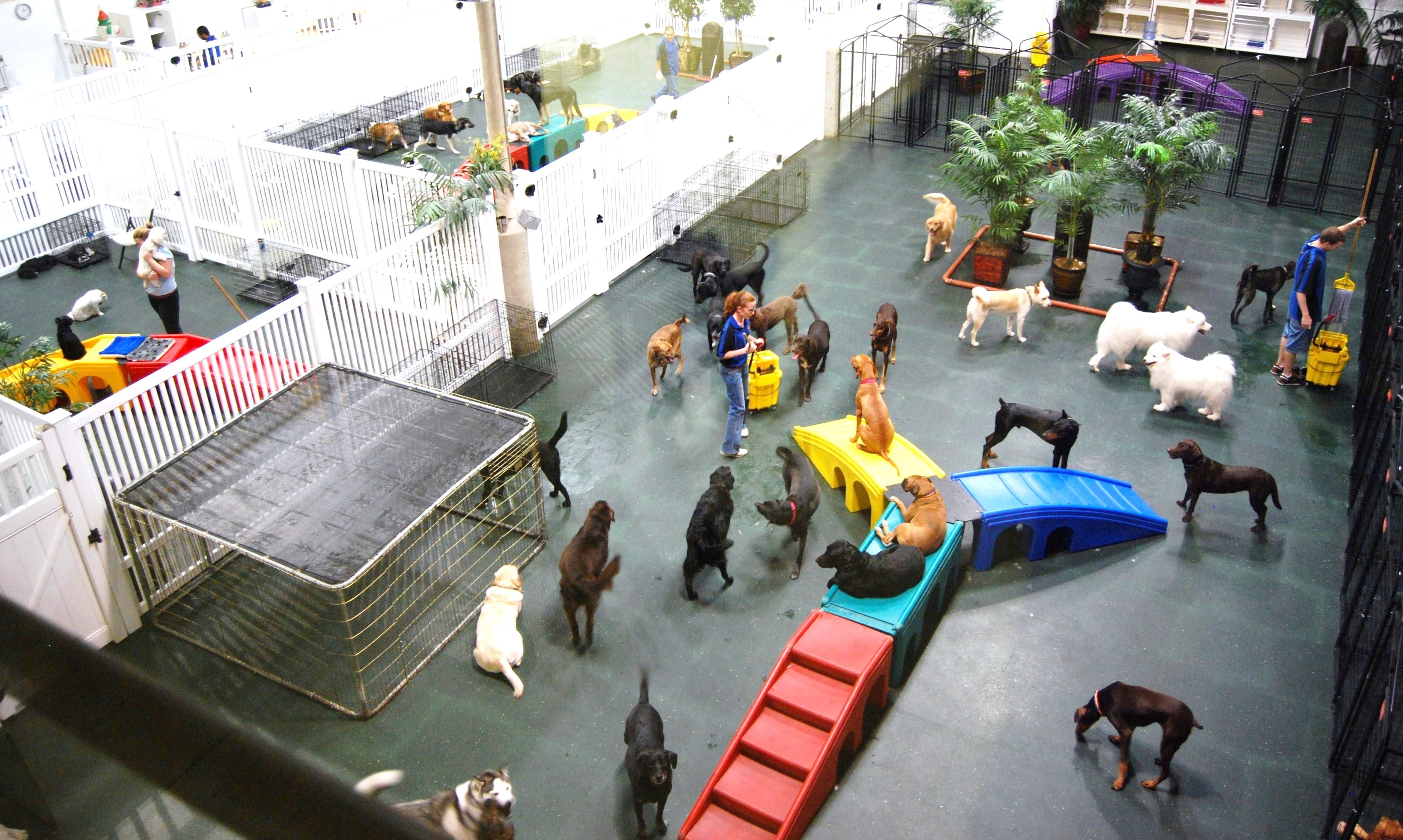 Brambleton Ashburn Dog Park