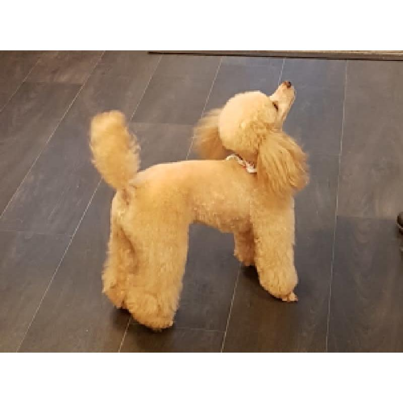 Pawfection Dog Grooming - Newton Stewart, Dumfriesshire DG8 6EF - 07468 561556   ShowMeLocal.com