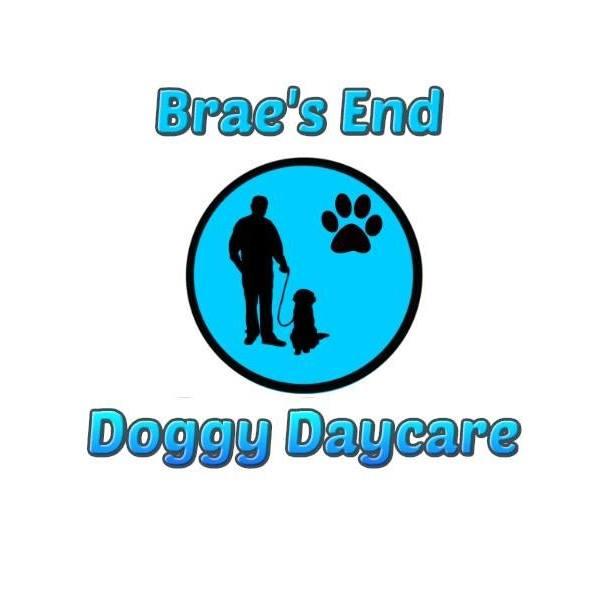 Brae's End Doggy Daycare Ballyclare 07565 729660