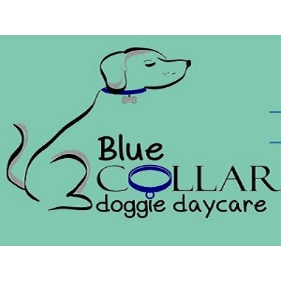 Blue Collar doggie daycare, LLC - Syracuse, NY 13214 - (315)907-3454 | ShowMeLocal.com