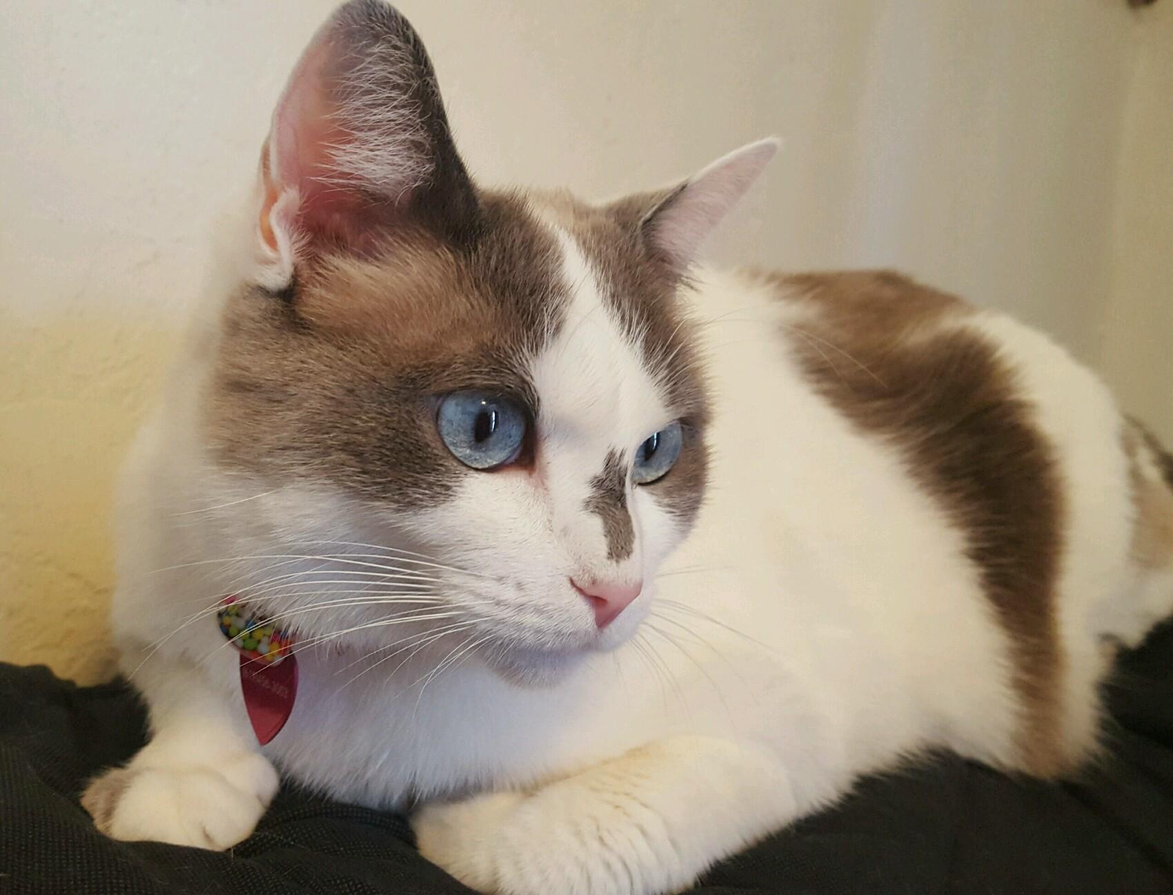 Best Cat Veterinarian San Diego