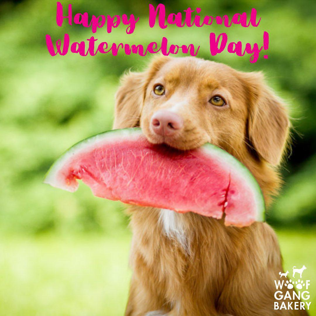 Need Raw diet for your pets? Woof Gang Bakery & Grooming Aventura in Florida has the largest selection of raw diets with a strong emphasis on holistic natural care. Homoeopathic and herbal remedies.