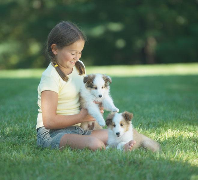 Indiana Pet Fence image 0