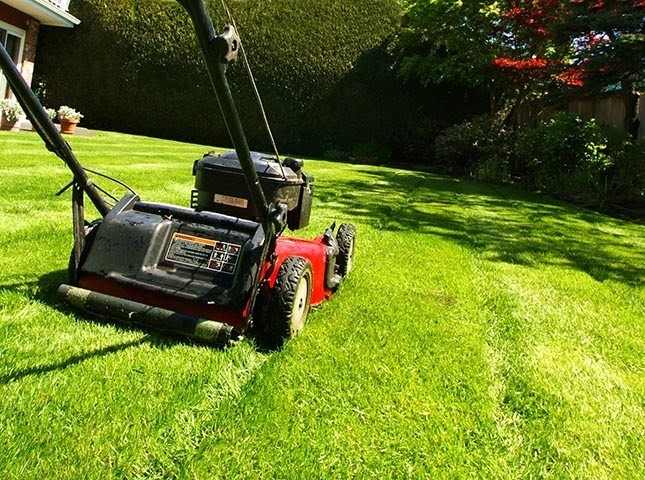 Premier Lawn and Tree Care