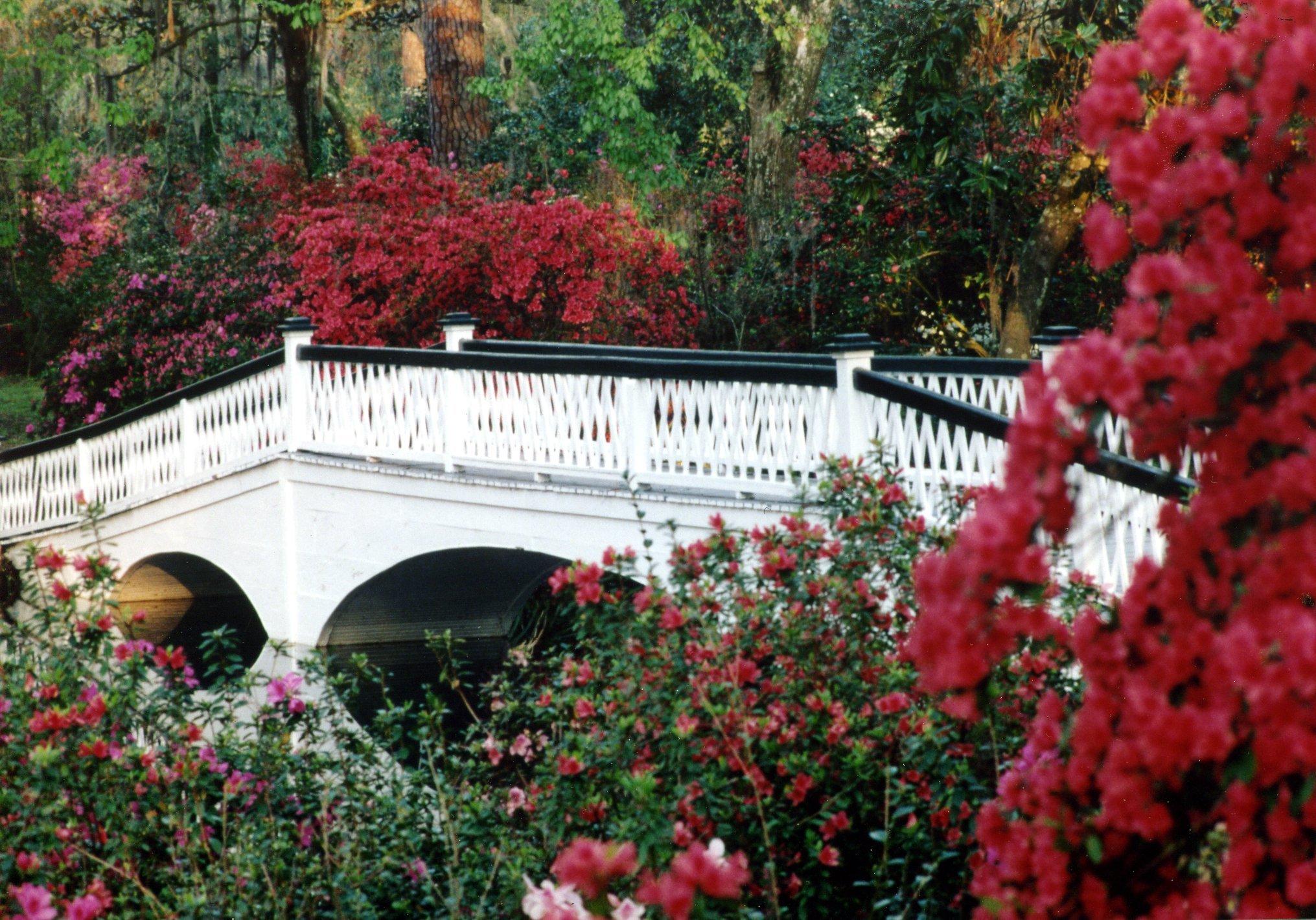 Magnolia Plantation & Gardens image 1