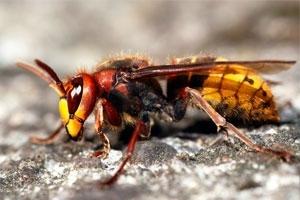 Biz-zz Bee Farms Pest Control