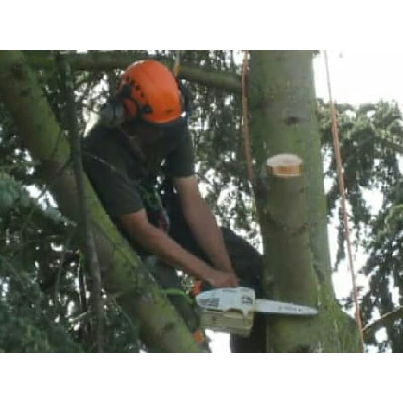 D. Bousfield Tree Services Huntingdon 07534 707100