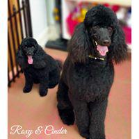 Woof Gang Bakery and Grooming Pompano Beach