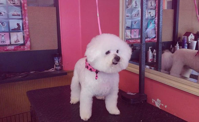 Dog Grooming In Huber Heights Ohio