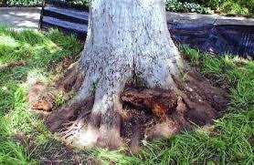 Green Rhino Tree Care
