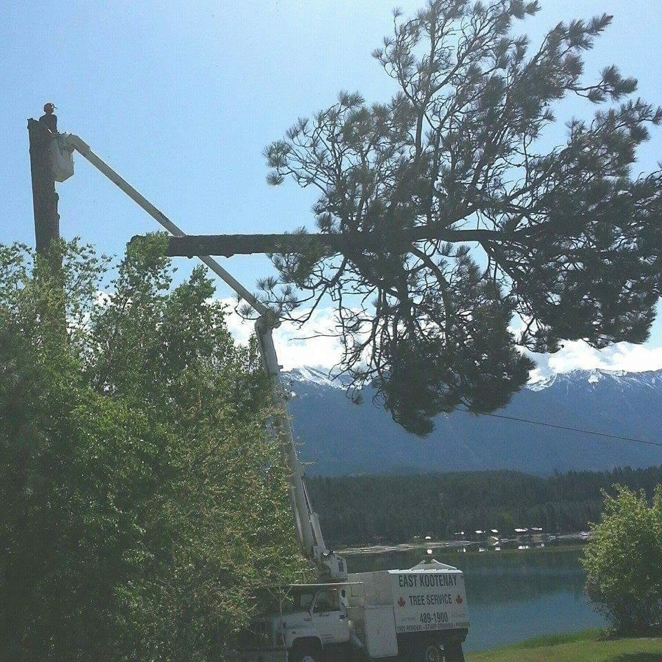 East Kootenay Tree Service in Cranbrook
