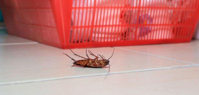 Code Pest Control